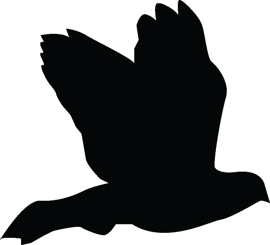 AFTERMATH Bird